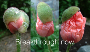 transformation, humanity's flowering